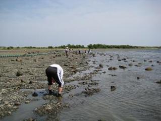 2010年5月3日成ケ島②