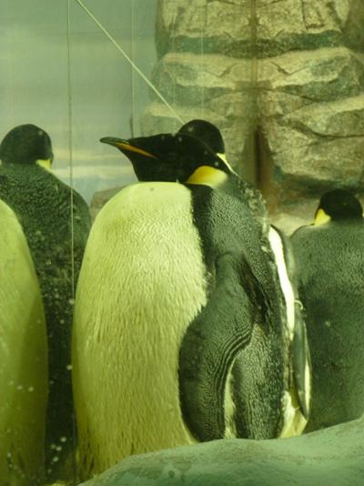 デブペンギン