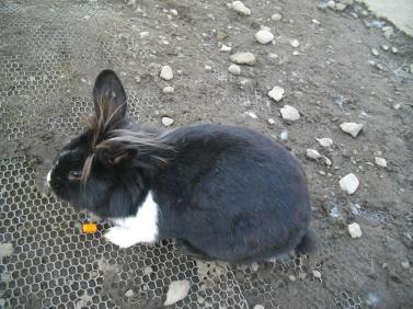 命名モヒカンウサギ