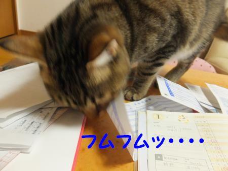 DSCF7831_convert_20130207110643.jpg