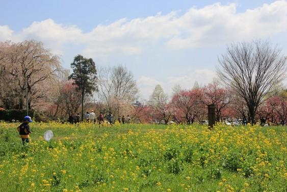 桃・桜・菜の花