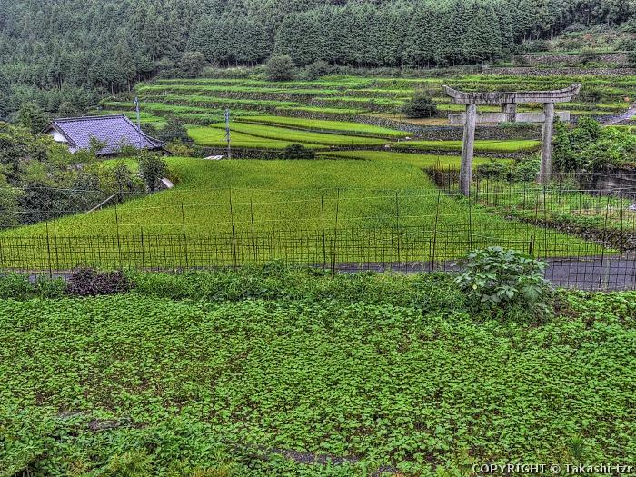 求菩提の農村景観1
