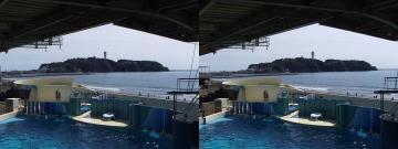 江ノ島を背景に