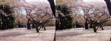 桜の花びらで覆われた地面