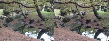 水面、影、樹木
