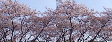 時々強く吹く風が花を散らす
