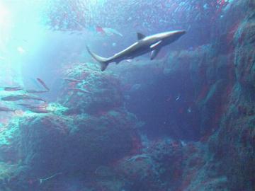サメ、フレームイン