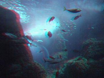 休まず泳ぐ魚たち