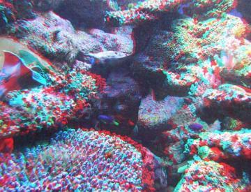 アナグリフ サンゴ礁