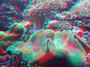 アナグリフ 珊瑚礁