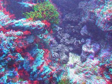 アナグリフ 奥行き珊瑚