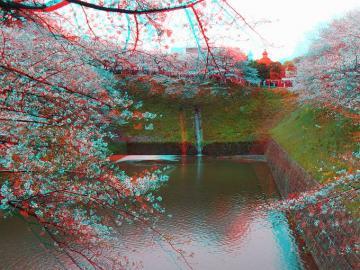 水面の桜貯まり