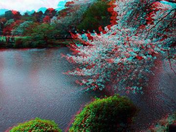 アナグリフ池と桜 1