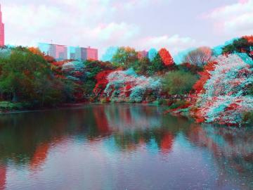 アナグリフ池と桜 3