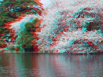 アナグリフ池と桜 4