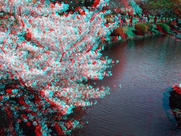 アナグリフ桜と池