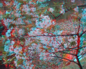 桜の奥の水風景 アナグリフ