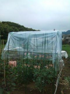 619_トマト屋根 完成
