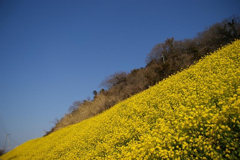 愛媛2011春 055