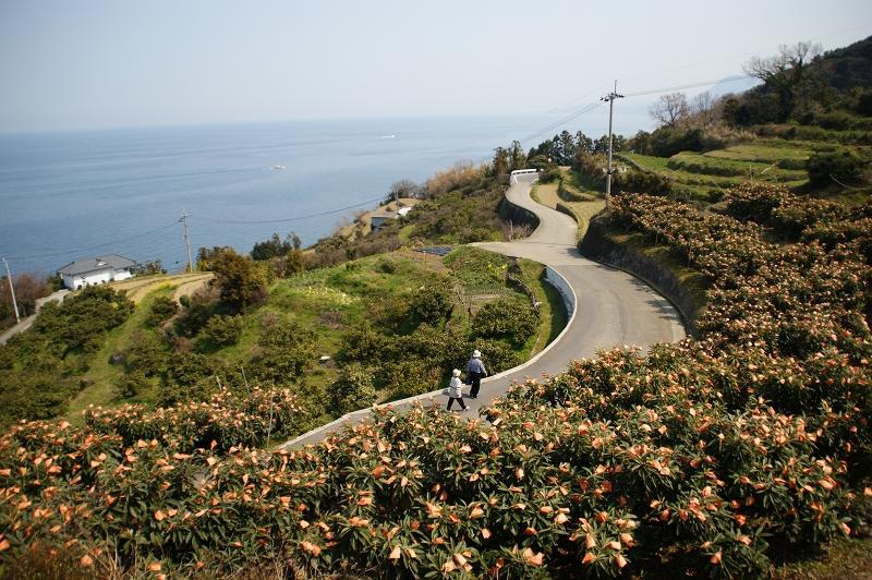 愛媛2011春 198