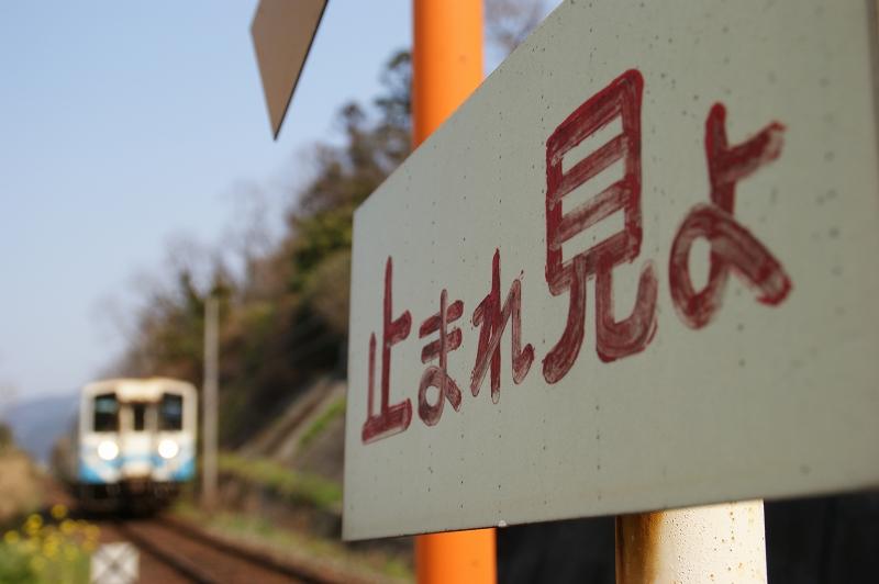 愛媛2011春 256