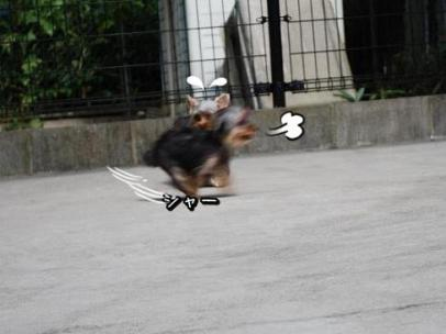 飛びますっ!飛びますっ!