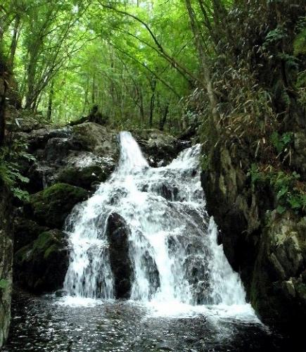 小槌川 上流の滝