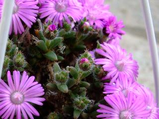 蕾と花のアップww