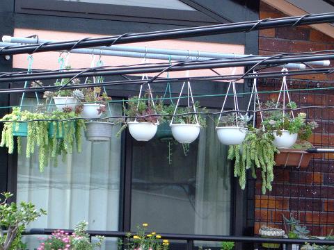 ベランダ物干し場の多肉植物!遠くから見るとこんな感じで吊られてる
