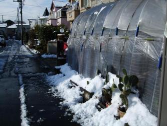 2011.02.15朝、晴れ!~昨晩の大雪どんどん溶けています!