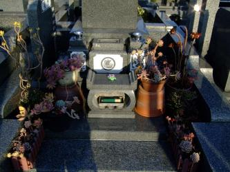 お墓に多肉寄せ植えを飾る!真冬~真夏痛みながら~密かに3年目!2011.02.22