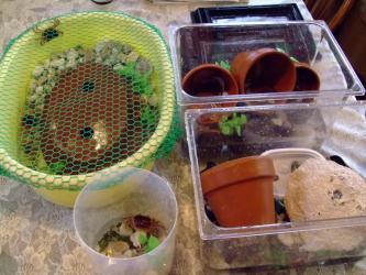 狭い飼育水槽を分けて沢蟹環境改善~共食い・ケンカ防止です!