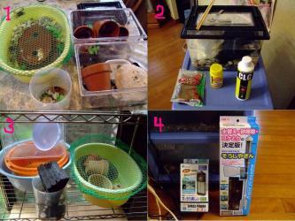 沢蟹飼育で使った、使っている用具いろいろ~水槽、カルキ抜き剤、餌、その他