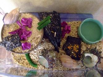 キャベツ、キュウリ、干しエビ、カメの餌、ザリガニの餌~食べます!
