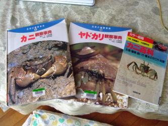 地域図書館でカニ・ヤドカリ本を借りてきました!知らない話がいっぱいです!