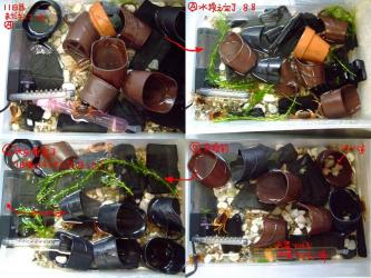 沢蟹ハウス~11日目の水交換~濾過装置が安定してまだいけそうなくらい透明な水質ですが、交換します!