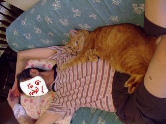3週間振りにジジの腹の上でくつろぐ~wレブン(猫)はジジっこです!2011.0814