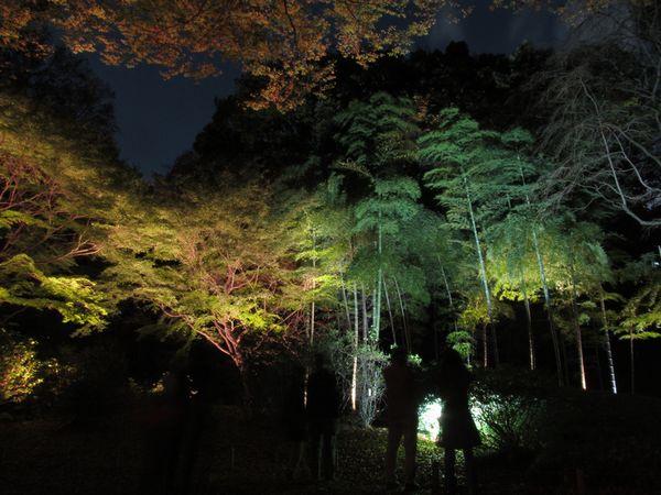 外周通路沿いにある竹。緑色の幹や葉が鮮やか。