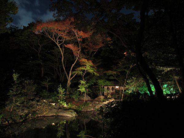 滝見茶屋付近のライトアップ