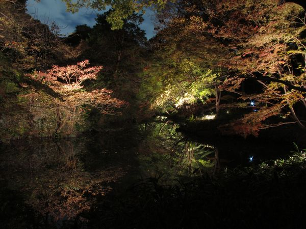 渓流沿いのライトアップ。水面に映る木々が印象的。