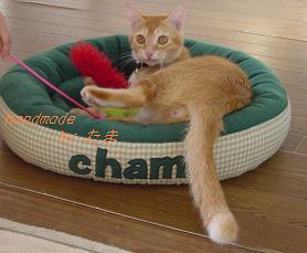 2月2日猫ベッド緑
