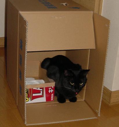 箱に収まる2