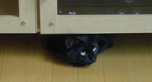 TVボードの下から