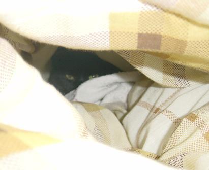 布団の中に・・・