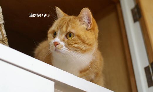 ぷぷのかない90のコピー