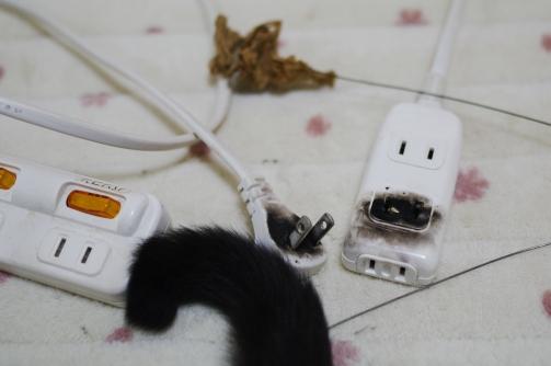 キャットダンサーと電気