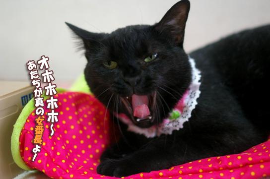 くーちゃん大笑いーーーのコピー