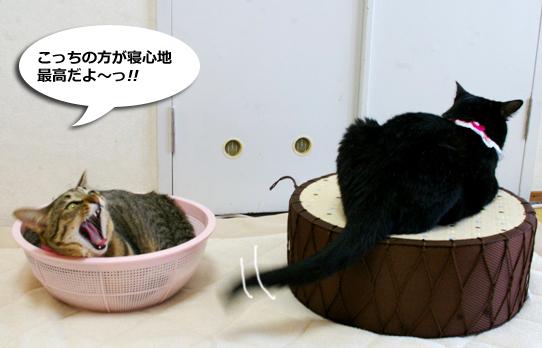 ku- tyokoyoピー