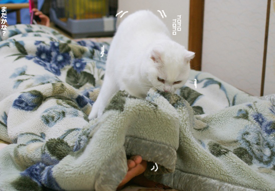 tama nofumifumi34242コピー