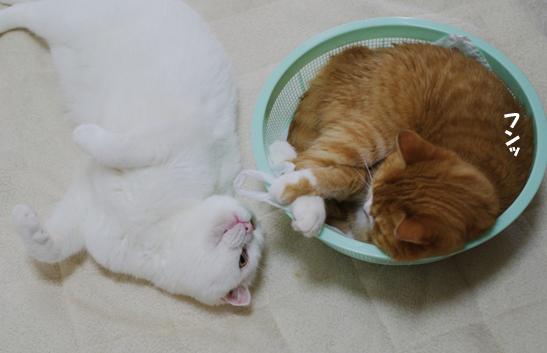 ぷーちゃん最近ストーカーおやすみしてごめんね。のコピー